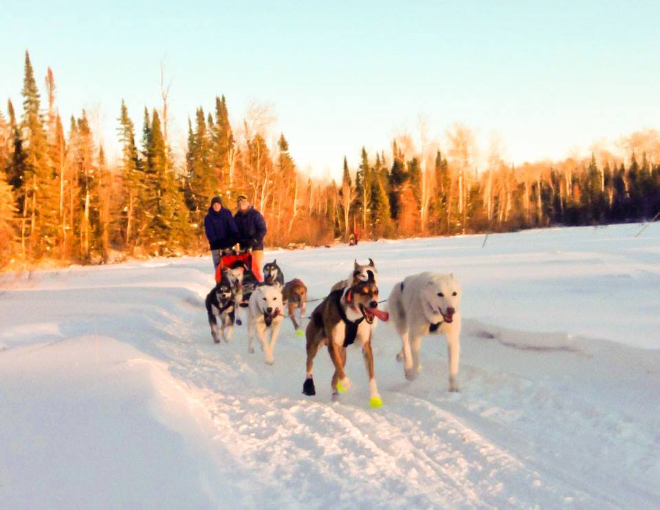 dog-sledding-peo